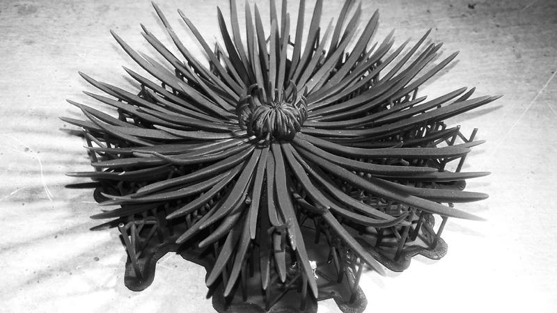 crisantemo_01_h450