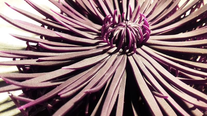 crisantemo_03_h450