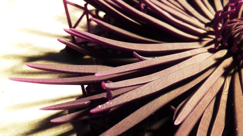 crisantemo_05_h450
