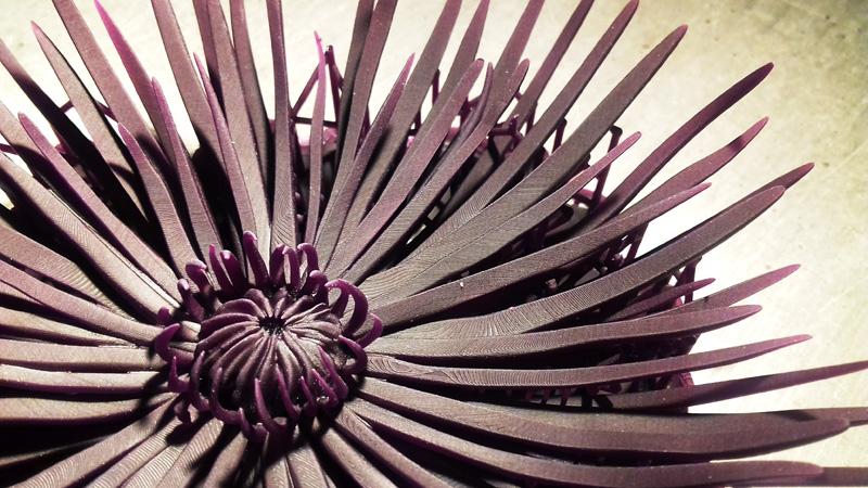 crisantemo_06_h450