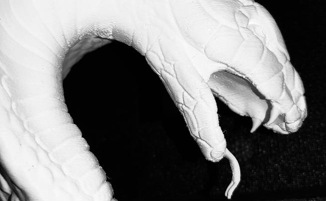 testa serpente 03