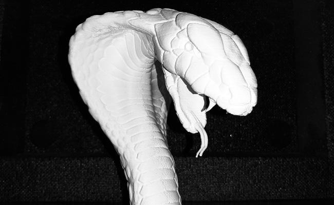 testa serpente 04
