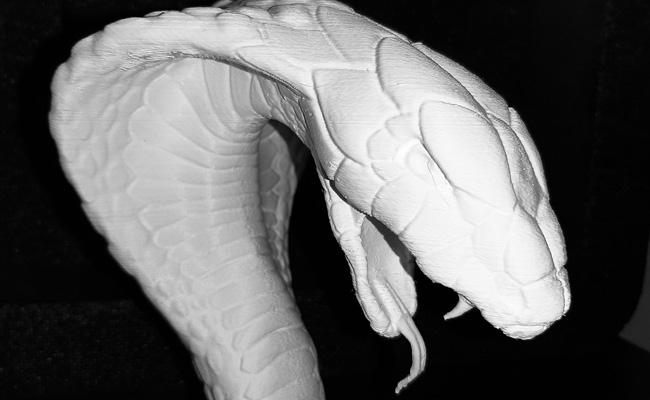testa serpente 05